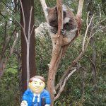 Visiting local wildlife - Healesville Sanctuary, Melbourne
